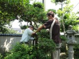 tuteur bambou, jardin japonais