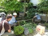 jardin japonais, bambou, clôture